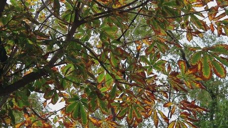 Branches and leaves of a tree, low view