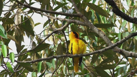 Bright bird in a tropical tree