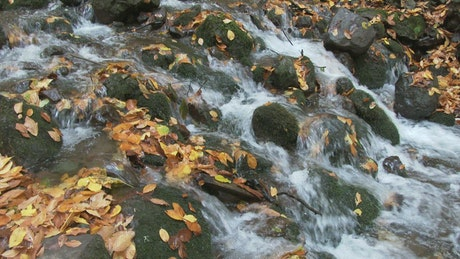 Brook flowing through mossy stones in the forest