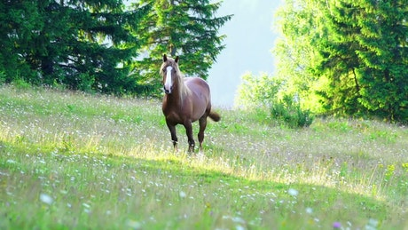 Brown horse on a wildflower meadow