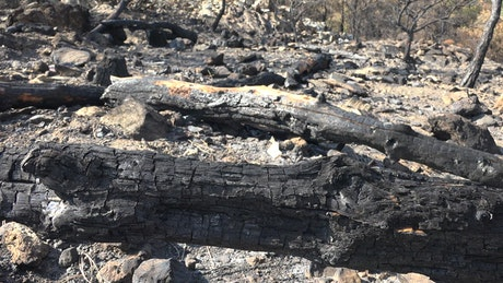 Burned forest and rocks