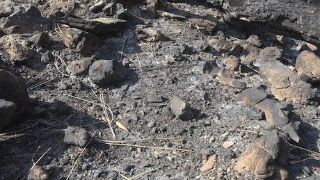 Burned forest soil and rocks