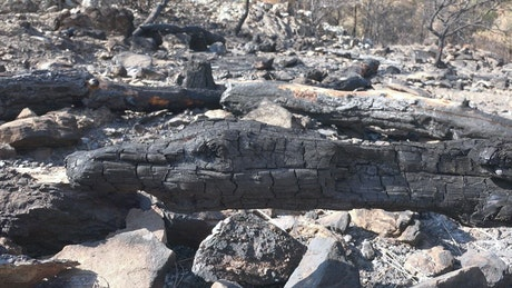 Burned trunks and rocks