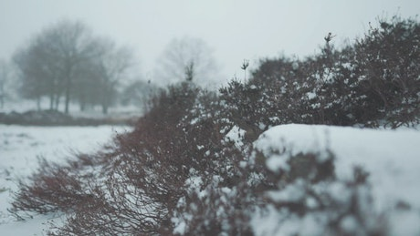 Bushes with snow in a forest