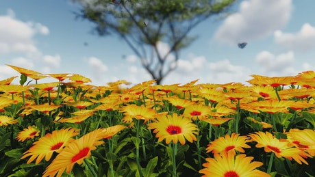 Butterflies in a sunflower field