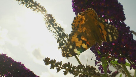 Butterfly hanging off of a flower