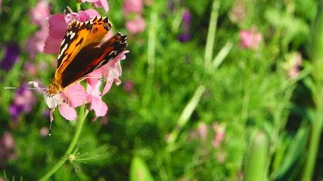 Butterfly in a meadow
