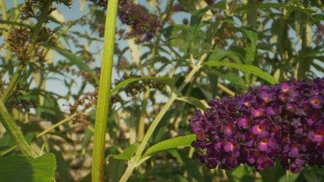 Butterfly in a summer garden