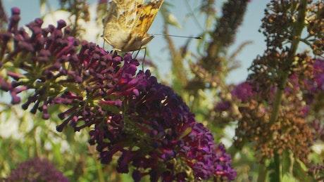 Butterfly in the breeze