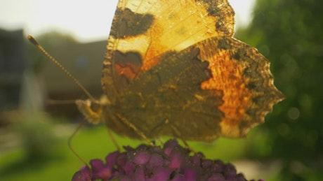 Butterfly leaving a flower
