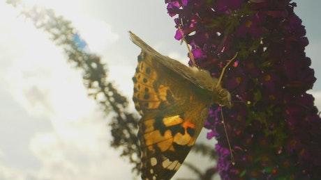 Butterfly walking on flowers