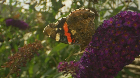 Butterfly with dark patterns