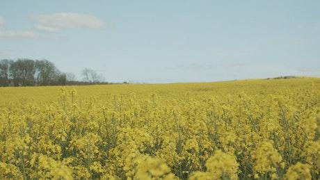 Calm breeze over fields