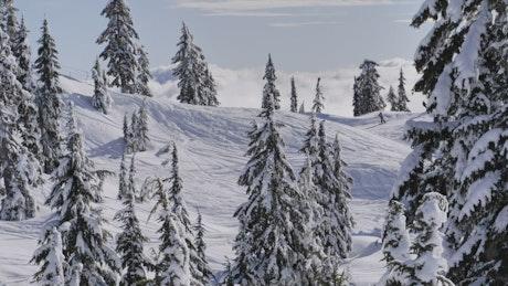 Canadian Mountain Peak Environment