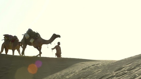 Caravan of camels crossing the desert