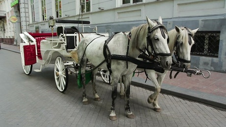 Carriage horses in the street