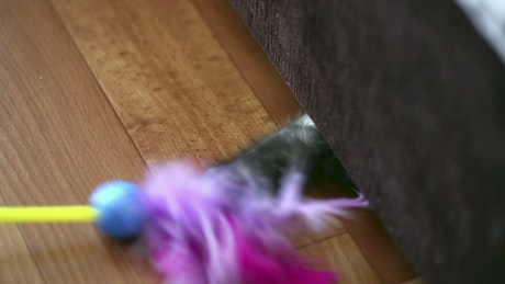 Cat under the couch playing with feathers