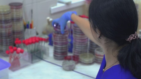 Chemist working with viruses samples in the lab