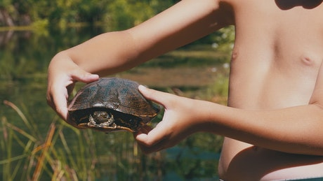 Child shows a turtle to the camera