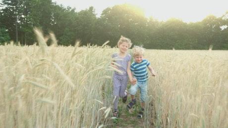 Children walking through a wheat field at summer