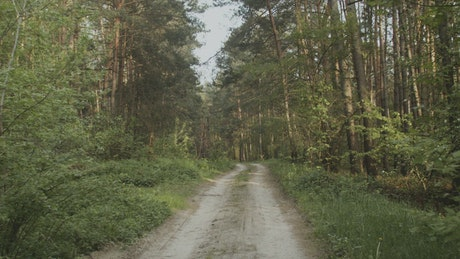 Cinematic road in a forest