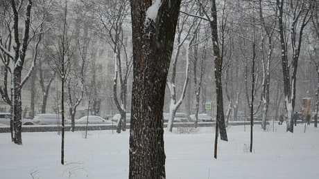 City park covered in heavy snow