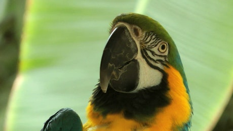 Close up of a parrot in nature