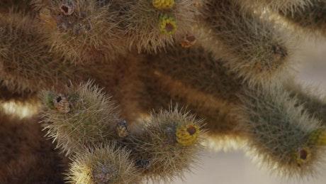 Close up of a spiny cactus plant