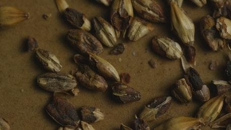Close up of broken barley
