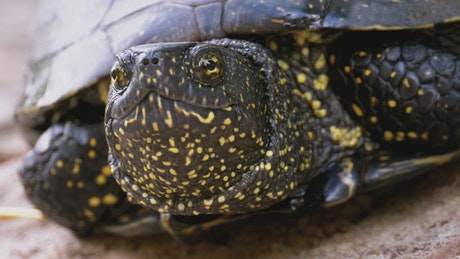 Close up of the head of a turtle