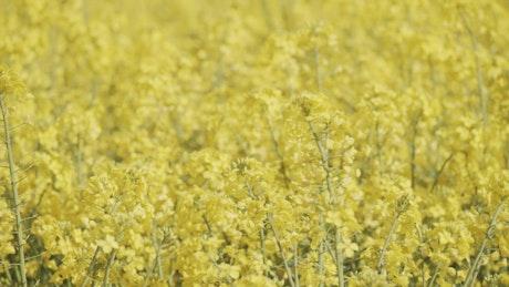 Close up shot of a crop field