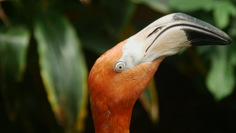 Close up to the heads of flamingos