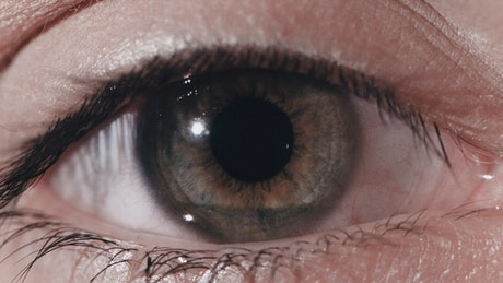 Closeup of a dark grey eye