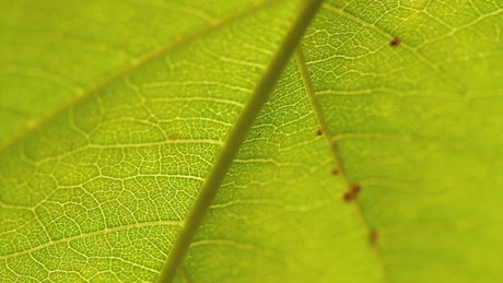 Closeup of a garden leaf