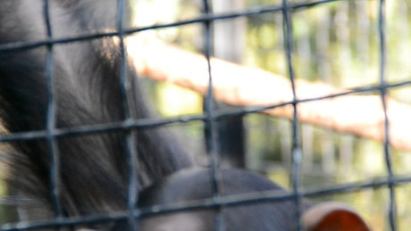 Closeup of a Monkey in a Zoo