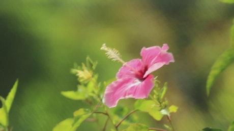Closeup of a pink flower