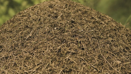 Closeup of an Anthill