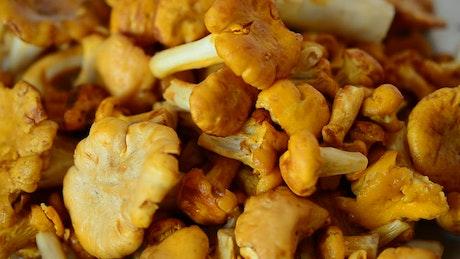Closeup of wild mushrooms piled up