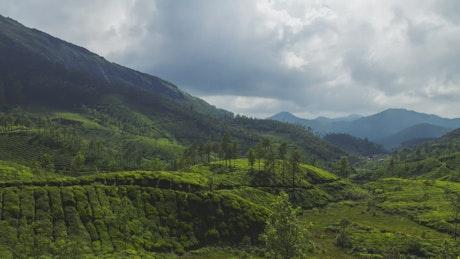 Clouds above a tea plantation