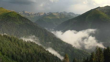 Clouds forming in the mountain forest