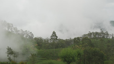 Clouds moving over a tea plantations