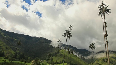 Clouds moving over mountains and palm trees