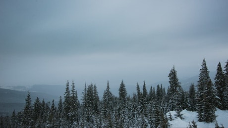 Cloudy sky in a winter forest