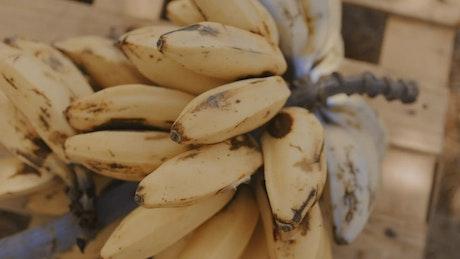 Cluster of small bananas, closeup