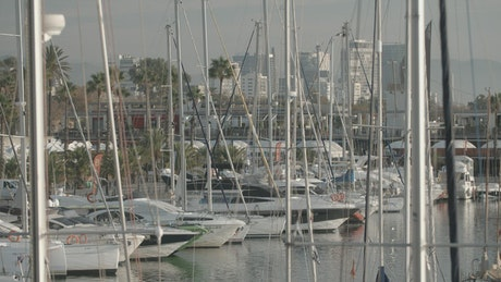 Coast covered by masts, boats and small yachts
