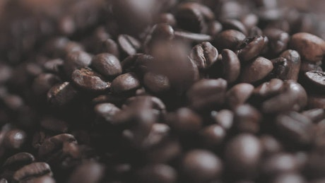 Coffee beans falling on a layer of more beans