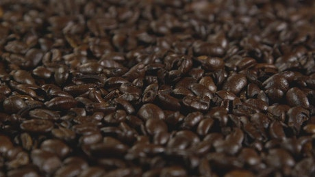Coffee beans ready for brewing