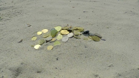 Coins buried in the sand