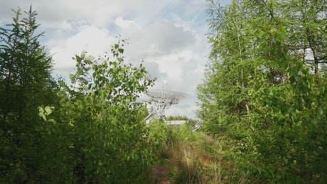 Communications antenna in the distance, seen from the undergrowth