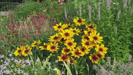 Community garden of wildflowers